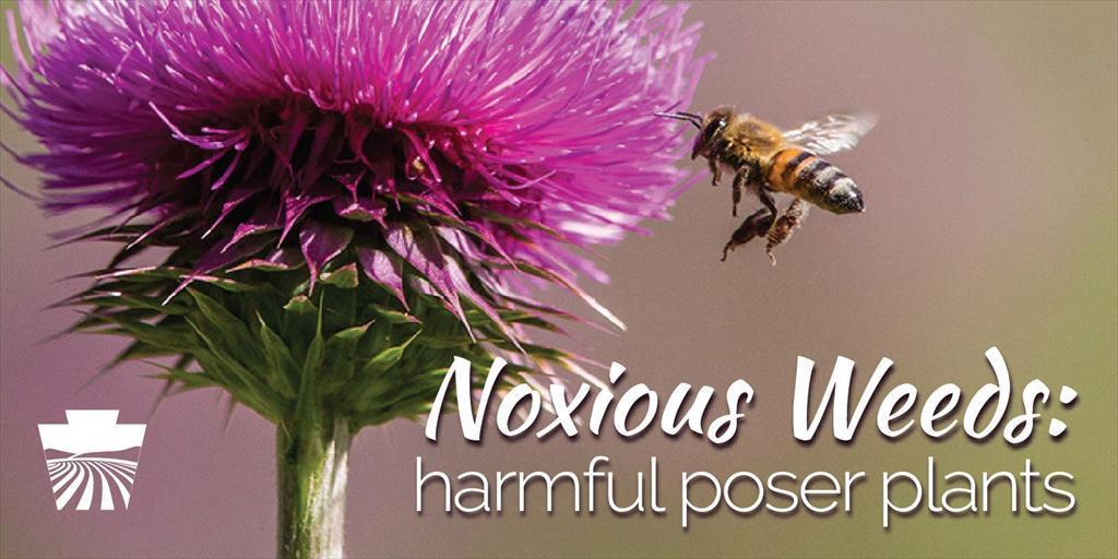 Noxious Weeds – Poser Plants that Harm Pennsylvania
