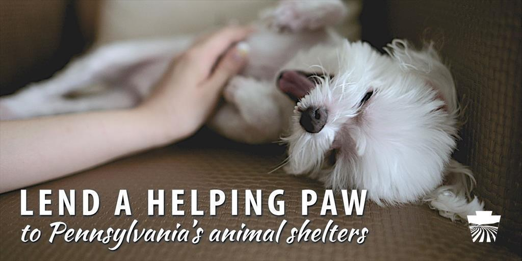 Lend a Helping Paw