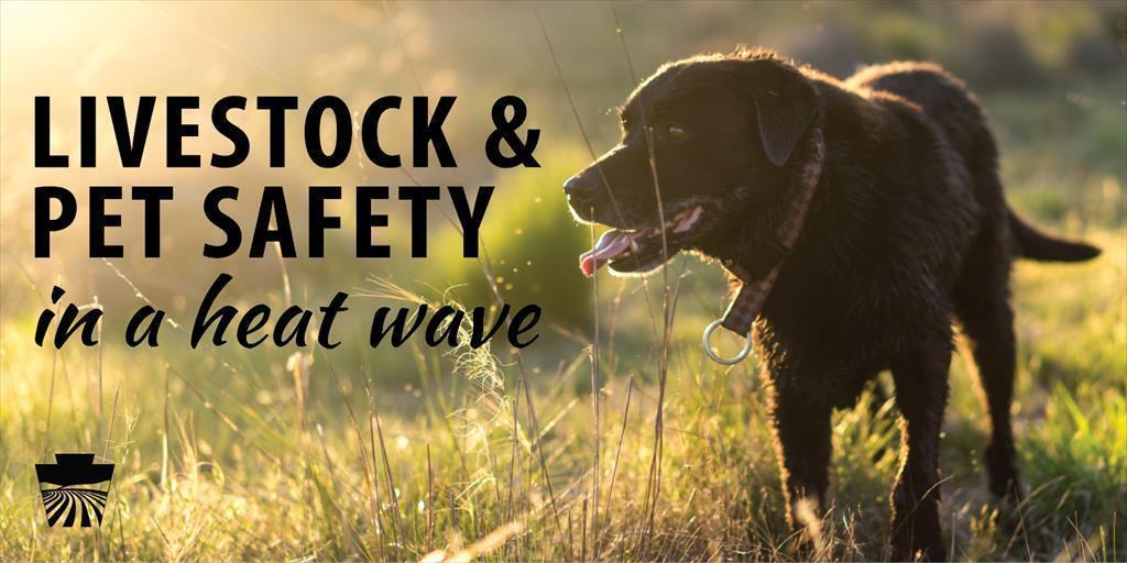 Livestock & Pet Safety in a Heat Wave