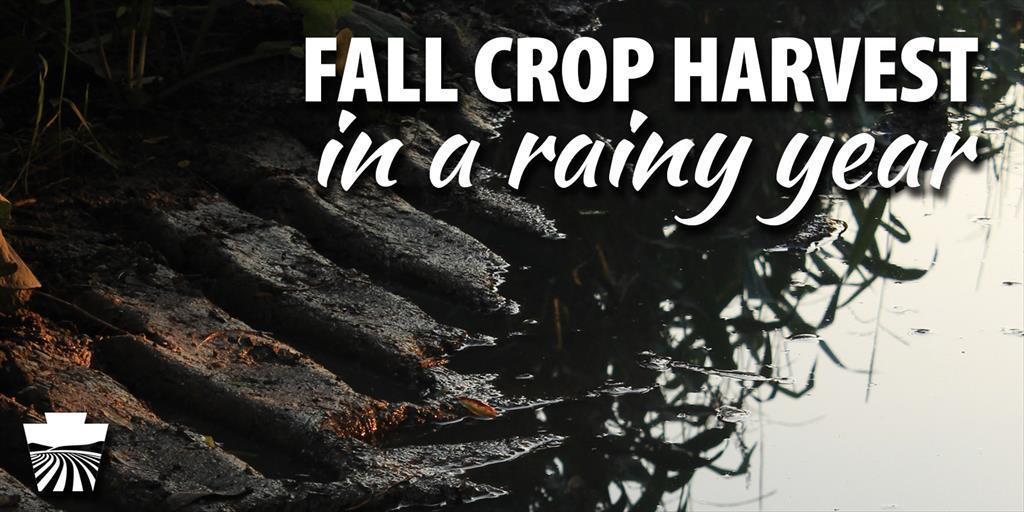Guidance for Fall Crop Harvest in 2018 – Making the Best of a Rainy Year