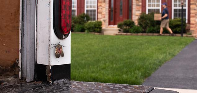 Spotted Lanternfly permit protects more than you realize.